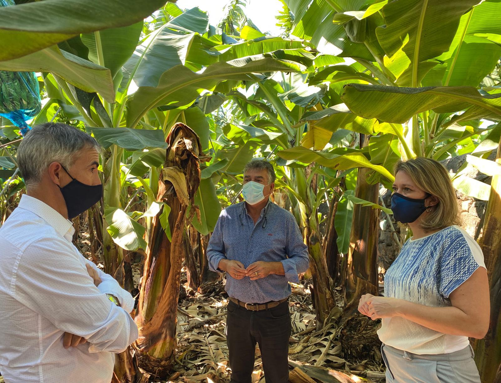 Agricultura y ASPA impulsan un proyecto para el ahorro de agua agrícola en La Palma