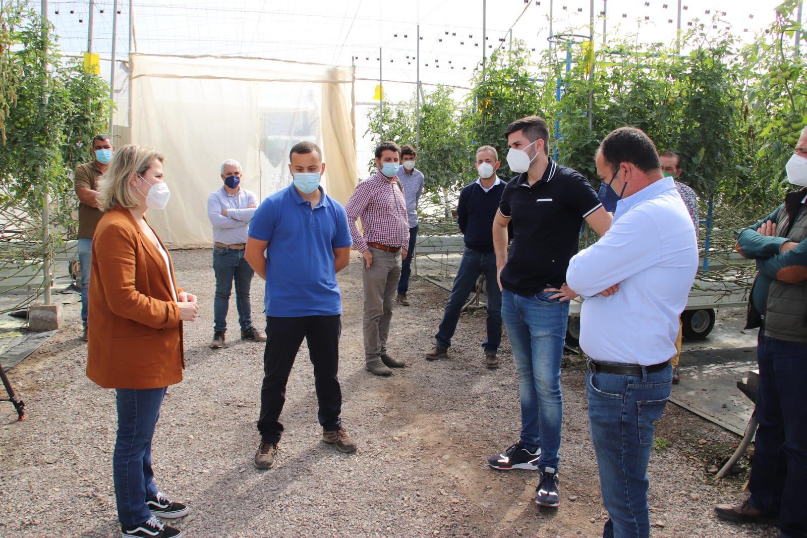 Vanoostende valora en La Aldea medidas económicas para los productores de tomate afectados por el hongo mildiu