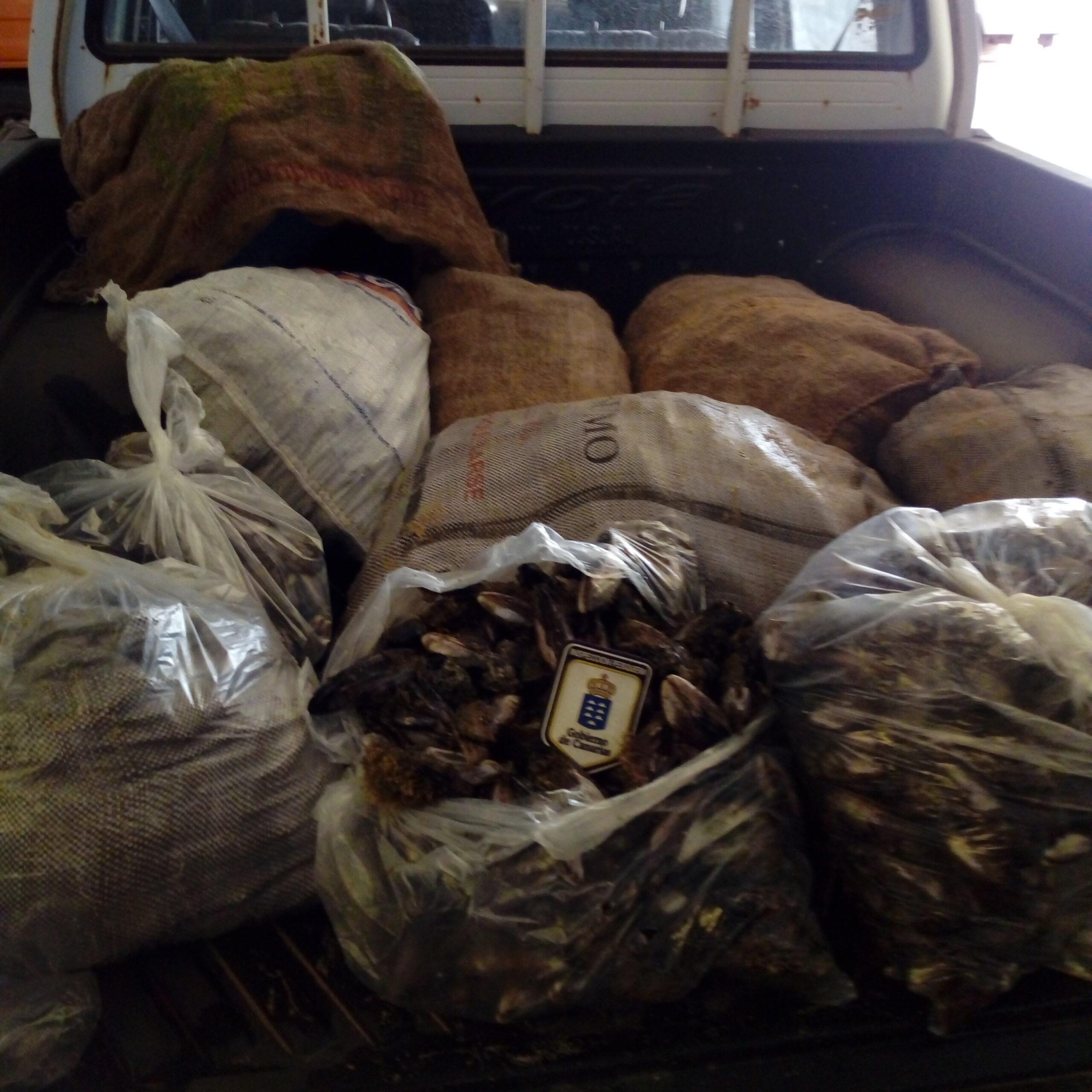 480 kilos de marisco y pescado ilegal durante la Semana Santa