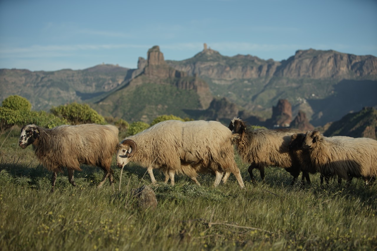 El Gobierno de Canarias lanza una encuesta sobre la situación agroalimentaria de las Islas
