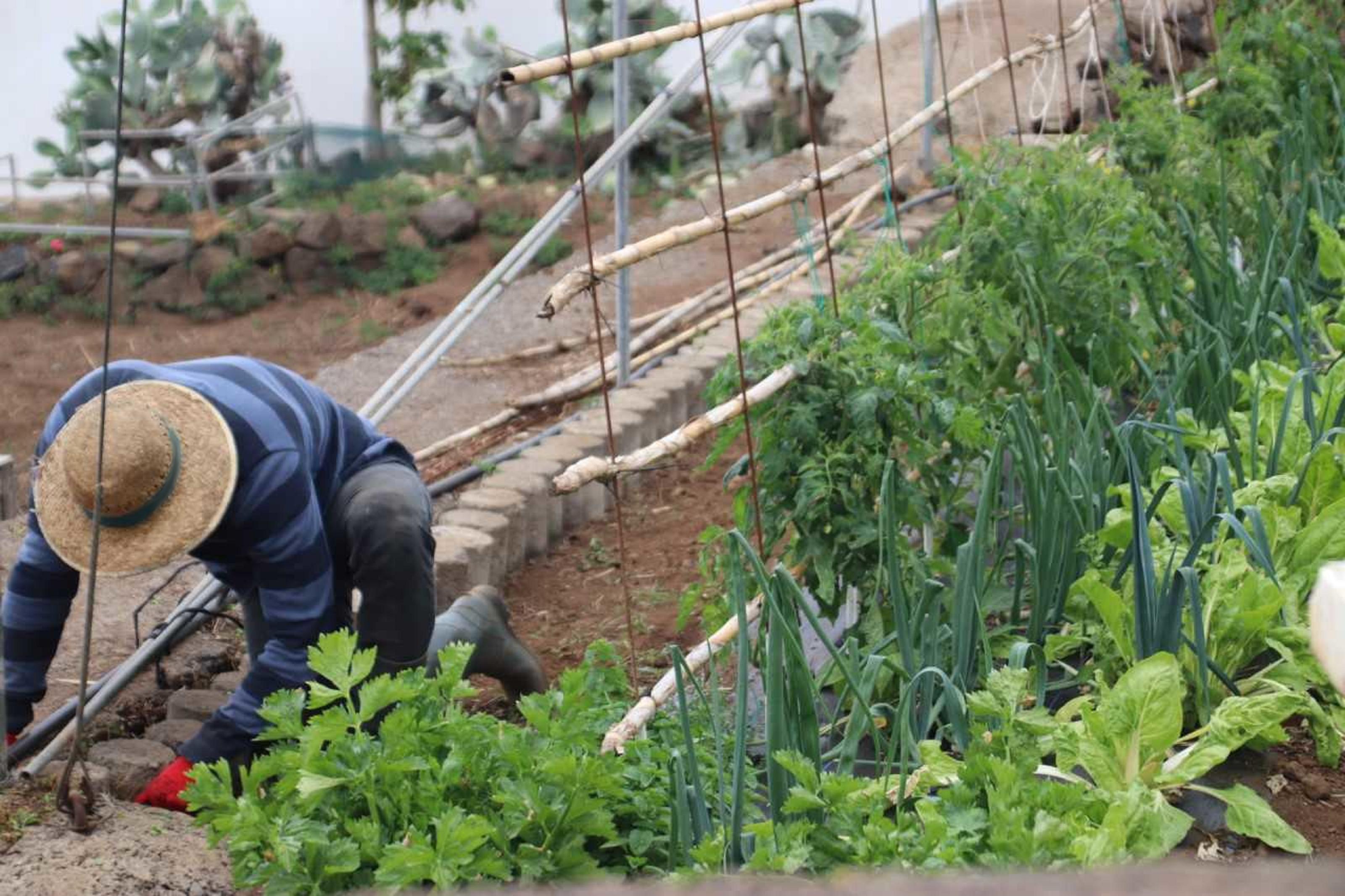 Las ayudas para la modernización en explotaciones agrícolas del Gobierno de Canarias alcanzan a 642 productores