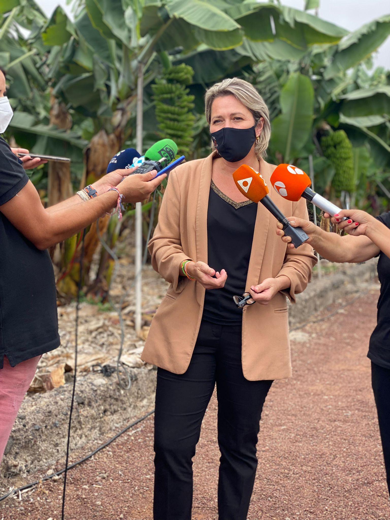 El Gobierno de Canarias garantiza las ayudas por las pérdidas en el sector agrario de La Palma